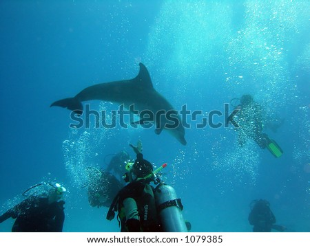 dolphins play - stock photo