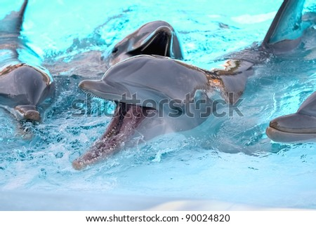 Dolphins playing in aquarium - stock photo