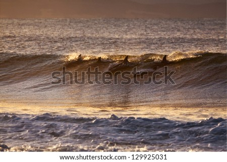Dolphins riding a wave - stock photo