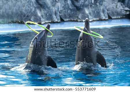 Dolphins show action