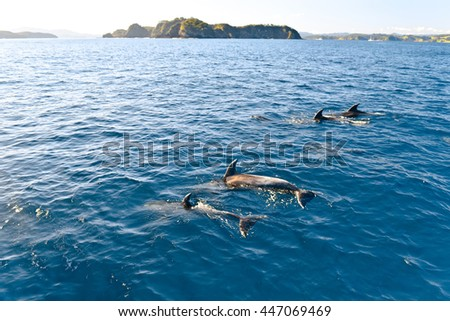 Dolphins swimming in the ocean, New Zealand - stock photo