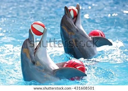 Dolphins with a ball - stock photo