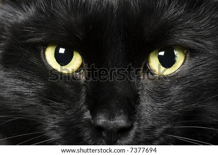 domestic animals: close-up of cat eyes - stock photo