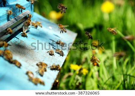 domestic bees . swarm of bees near a tap-hole . summer day in the apiary - stock photo