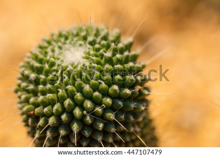 Domestic cactus closeup.