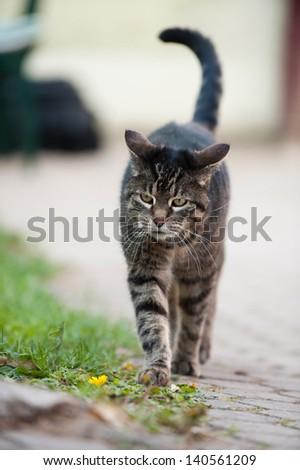 Domestic cat - stock photo