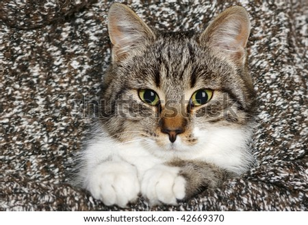 domestic cat and his scrutiny look - stock photo