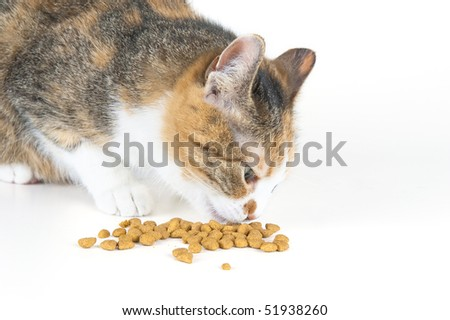 domestic cat eating - stock photo
