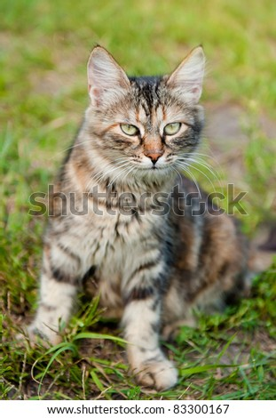 Domestic cat in grass outdoor shot at sunny day
