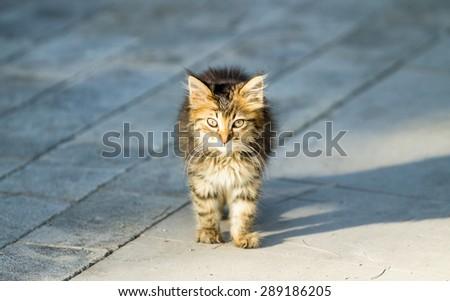domestic cat in nature - stock photo