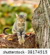 Domestic cat in the garden - stock photo