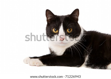 domestic cat lying down isolated on white - stock photo
