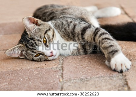 domestic cat on footpath plaster