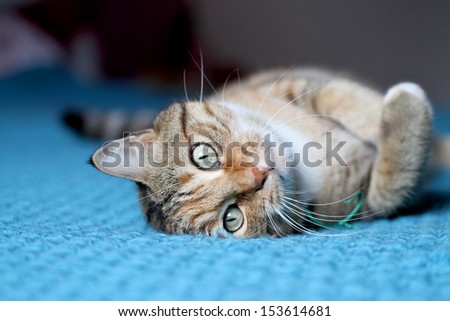 domestic cat on the bed - stock photo