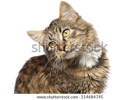 Domestic cat on white background. - stock photo