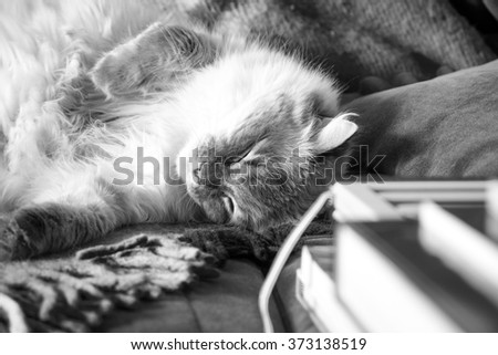 Domestic cat resting on the couch next to the book horizontal