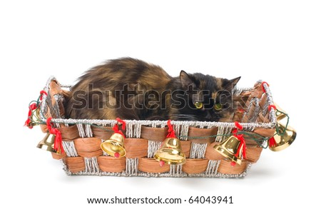 Domestic cat sitting in a Christmas basket
