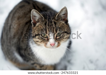 domestic cat sitting on the snow - stock photo