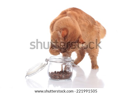 Domestic cat tries to get treats out of a glass - stock photo
