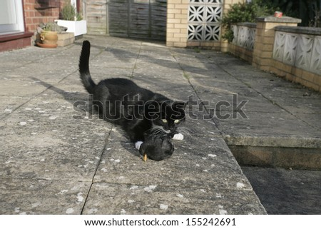 Domestic cat with dead blackbird