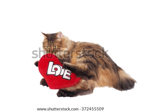 Domestic cat with soft red heart. Valentin theme. - stock photo