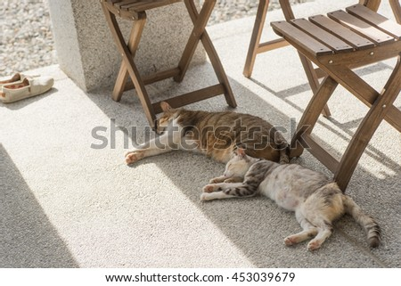 domestic couple cat sleep together on the ground