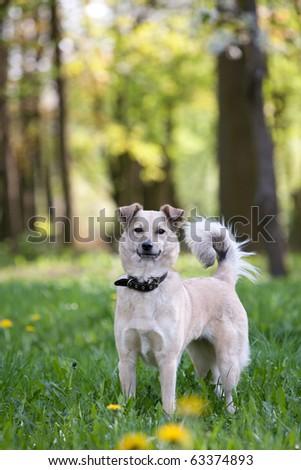 Domestic dog enjoying nature - stock photo