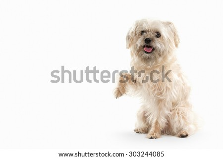 Domestic dog on white background