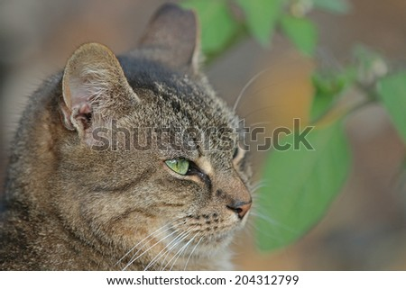 Domestic Feral Cat in the Wild. - stock photo