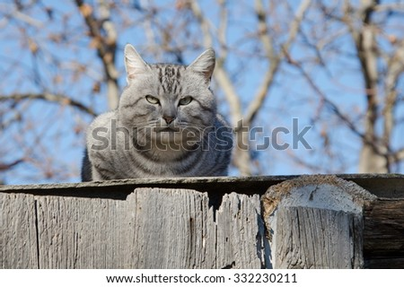 Domestic grey cat in early spring  - stock photo