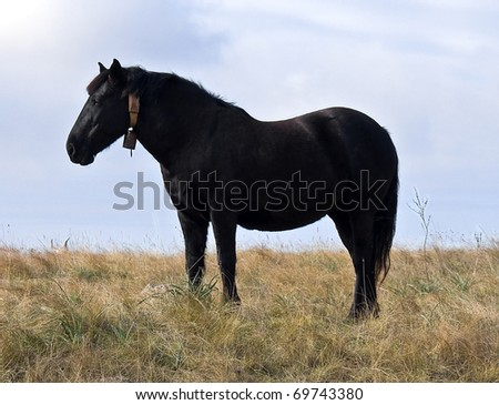 Domestic horse in meadow.