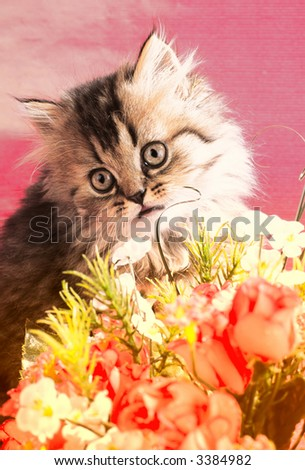 domestic kitten on  pink background, close up - stock photo