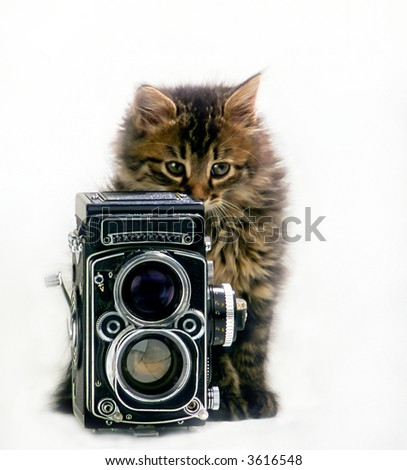 domestic kitten with  camera on  white background,  close up - stock photo