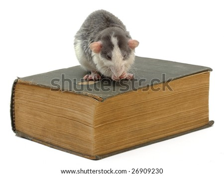 domestic rat sitting on ancient book - stock photo