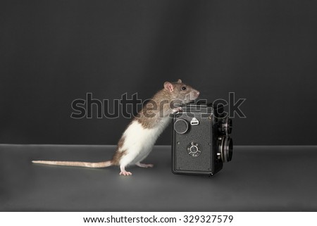 domestic rat with the old black camera