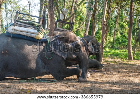Domesticated elephant resting, Chitwan National Park, Nepal