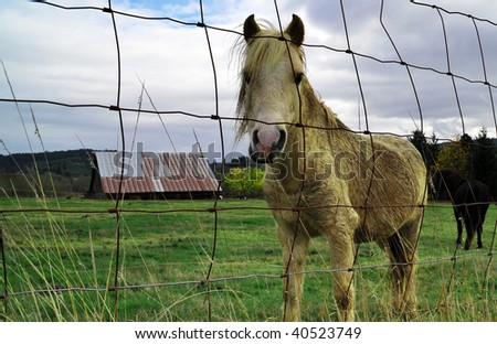 Domesticated horse pony in front of barn