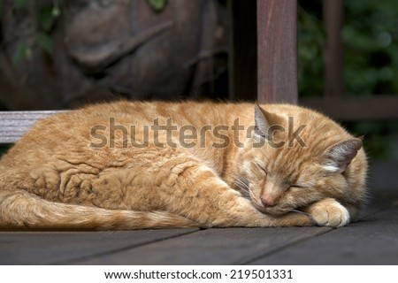 Domesticated Orange Tabby cat sleeping outside on wood patio deck - stock photo