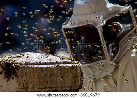 domestication of bee - stock photo