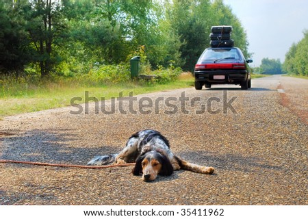 Don't ditch the dog when you go on vacation! - stock photo