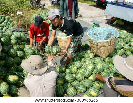 DONG THAP, VIET NAM- JULY 27: Group of Asian farmer working on agriculture field, Vietnamese man harvesting watermelon on water melon plantation to sale for trader, Dongthap, Vietnam, July 27, 2015 - stock photo