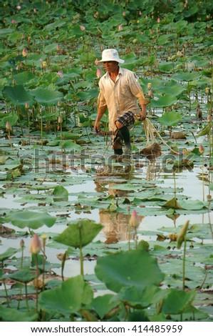 DONG THAP, VIET NAM- NOV 25, 2014: Vietnamese farmer working on lotus pond, Asian man crop lotus flower, an agriculture product at Mekong Delta, Vietnam