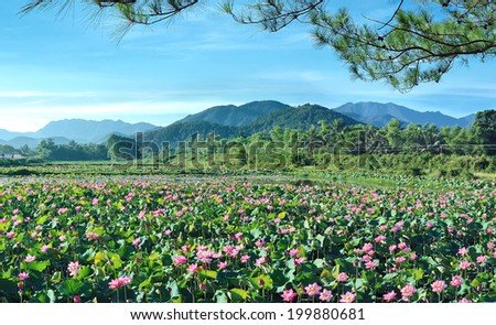 Dong Thap, Vietnam. February 16, 2014. Dong Thap, Viet Nam famous large lotus pond - stock photo