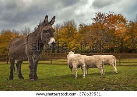 donkey and cheeps. Local farm. London - stock photo