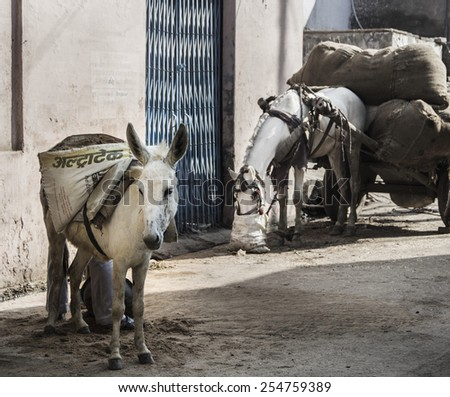 Donkey and eating horse on rural street. Agra. India - stock photo