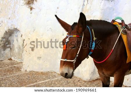 Donkey at the Old Port, Santorini, Greece - stock photo