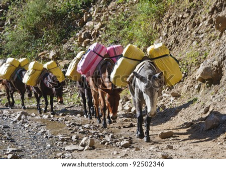 Donkey caravan in mountains of Nepal - stock photo