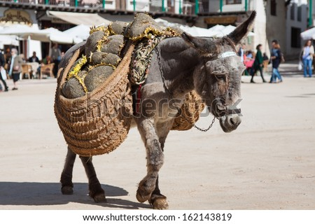 Donkey carrying a sunflower in chinchon near madrid - stock photo