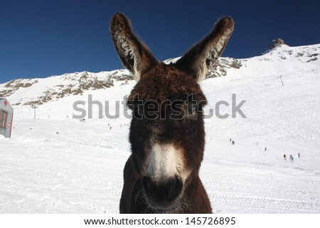 Donkey close-up in the mountains in winter - stock photo