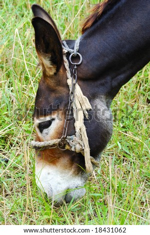 Donkey eating grass - stock photo